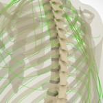 spinal_cord_injury